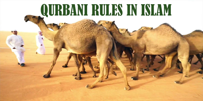 Qurbani Rules