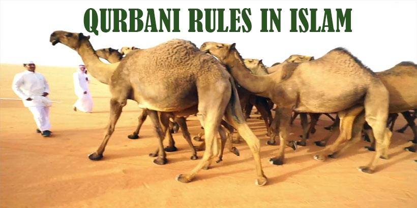 Qurbani Rules
